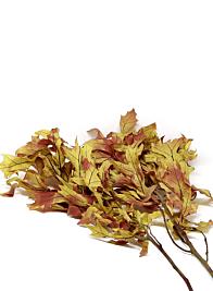 Transparent Autumn Oak Leaves