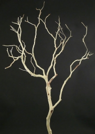2ft & 3ft Sanded Manzanita Branches