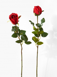 25in Red Prize Rose Bud