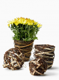 Vine And Birch Balls & Plant Pot Covers