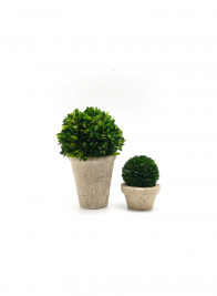 4in Preserved Boxwood Ball In Pot