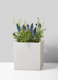 muscari rosemary in square stone planter