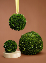 6in Preserved Boxwood Ball