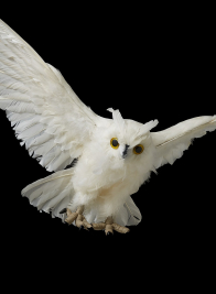white owl halloween decor props
