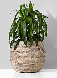 whitewash water hyacinth plant basket