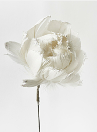 white feather christmas peony flower