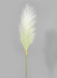 35in Pampas Grass