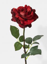 25in Open Wine Balmoral Rose
