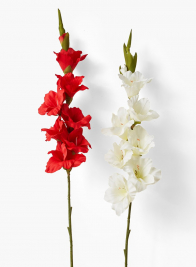 36in Ivory Cream Gladiola