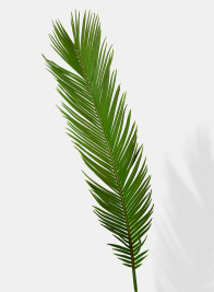 22in Cycas Palm Leaf