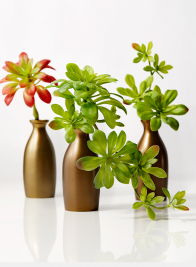 succulent centerpiece in antique gold bud vases