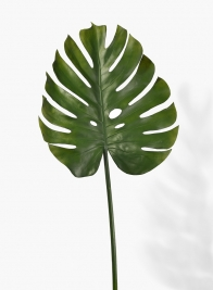 41in Monstera Leaf