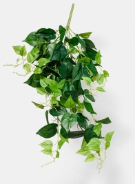 Fresh Green Jade Pothos Bush