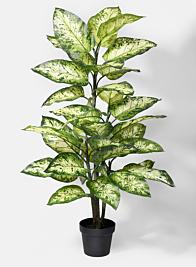 47in Splash Dieffenbachia Plant