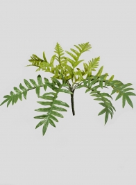 Light Green Fern Bush