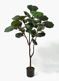 4ft Fiddle-Leaf Fig Tree