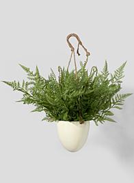 Large Boston Fern in Hanging Pot