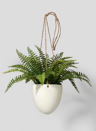Small Boston fern In Hanging Pot