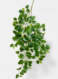 Jade Pothos Spray
