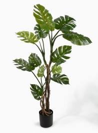 63in Split Philodendron Tree