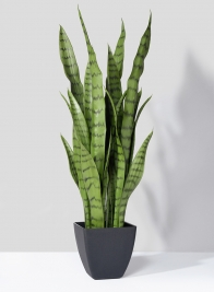 28in Sansevieria Trifasciata Snake Plant