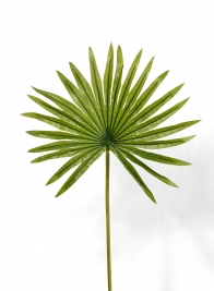 19in Mini Fan Palm Leaf