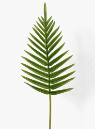26in Fern Leaf