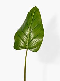 37in Beryl Leaf