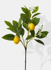 fake lemon tree pick