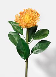 27in Orange  Protea