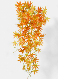 Orange Maple Leaf Bush