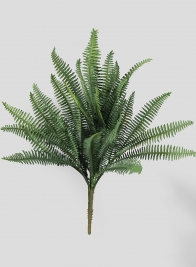 Dark Green Fern Bush