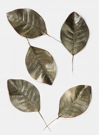 Platinum Brown Magnolia Leaf, Set of 5 24881