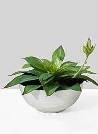 6 3/4in Stoneware Bowl