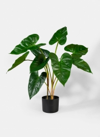 27in Anthurium Leaf Plant