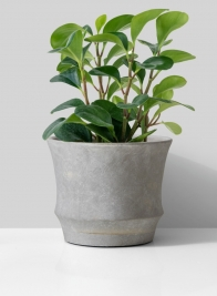Atelier 7 x 6in Corded Cement Pot