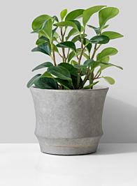 Atelier 7 x 6in Corded Cement Pot