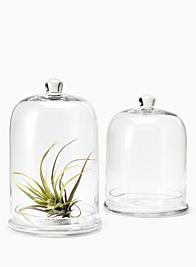 11in Glass Cloche & Base