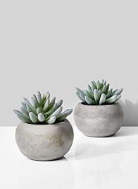 Flocked Finger Succulent In Cement Pot, Set of 2
