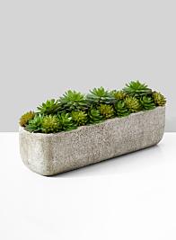 Succulent Mix In Rectangular Planter