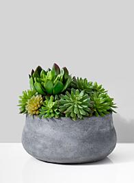 Echeveria Succulent Mix In Grey Cement pot