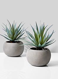 Sword Grass In Grey Cement Pot, Set of 2