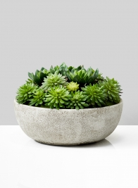 Echeveria Succulent Mix In Bowl