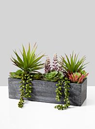 Mixed Succulents In Rectangular Planter