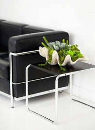 succulents in giant clamshell for home decor