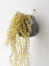 potted-artificial-moss-hanging-plant