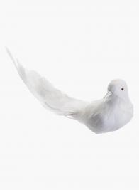 Long Tail White Dove