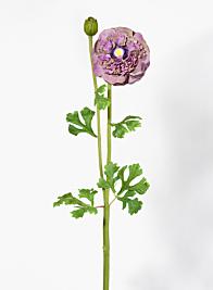 27in Purple & Green Ranunculus
