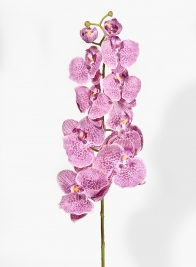 31in Purple Phalaenopsis Orchid
