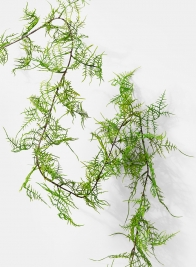 58in Asparagus Fern Garland
